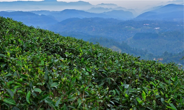 Sri Lanka Tea Journey - Jeff Fuchs
