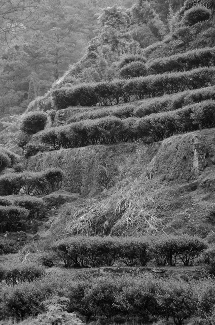 Some of the fabled terraces in Wuyishan