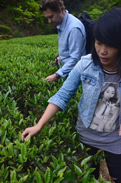 Cindy and Frank enjoy some moments with the precious Wuyishan leaves