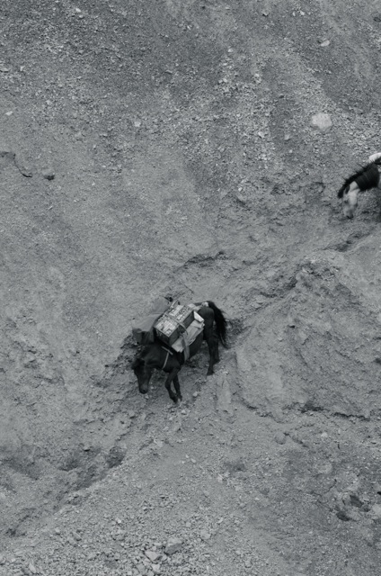 Heroes on hooves. Our mule team carefully makes its way down a mere strand of a path