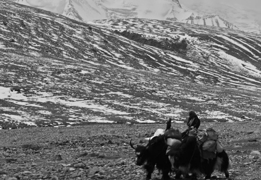 Though we won't be joined by a yak team this journey, mules will be along with us for the journey.