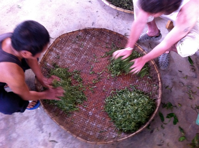 Each stage of the tea process needs the hands and head. Here I involve my hands kneading the tea leaves in 'Gao's Tea Headquarters'.